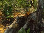Proprietário rural é autuado em 6,6 mil por exploração ilegal de madeira