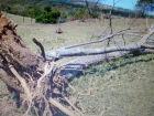 PMA autua proprietário rural em R$ 9,6 mil por derrubada de árvores sem autorização