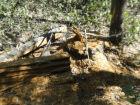 PMA autua assentado rural em R$ 3,3 mil por exploração ilegal de madeira