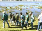 'Comoção popular' impede retirada  dos jacarés da Lagoa Maior