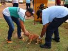 CCZ segue com vacinação antirrábica 'casa a casa' em Dourados