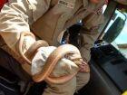 Serpente é capturada em residência no Portal do Parque em Nova Andradina