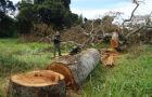PF flagra desmatamento ilegal praticado por índios e quilombolas em MS
