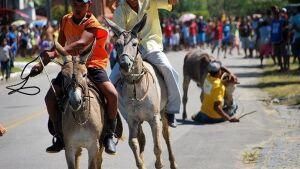 DEODÁPOLIS: 1ª Festa dos Pioneiros terá corrida do jegue, veja como fazer a inscrição