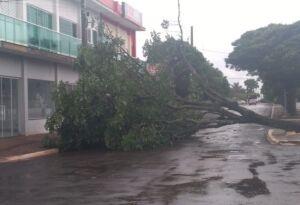 Tempestade passa e derruba árvore em frente a prefeitura em DEODÁPOLIS