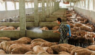 Descoberto na China mais um vírus que pode gerar pandemia no planeta