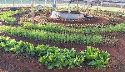 Horta em formato mandala une sustentabilidade e ressocialização na Penitenciária em MS