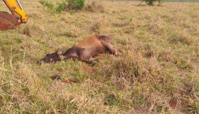 Descarga Elétrica: Raio mata vaca na zona rural em Glória de Dourados