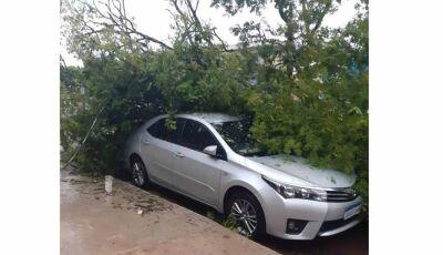 Temporal deixa rastro de destruição em Caarapó