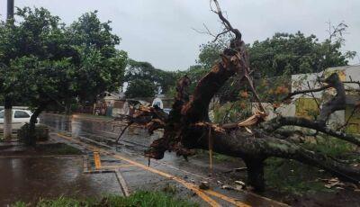 Danos causados por temporal faz Délia decretar situação de emergência