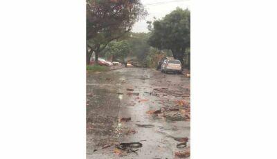 Chuva e ventos de 46km/h derrubam árvores e levam sujeira às ruas de Dourados