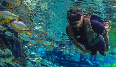O Aquário Natural é um dos mais belos atrativos de Bonito, no MS, veja como fazer reservar