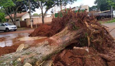 Corte de árvores deixa mais de 30 bairros sem água em Dourados; Sanesul procura responsáveis