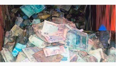 Pesadelo: Cupins comem todo o dinheiro guardado por fazendeiro durante a vida