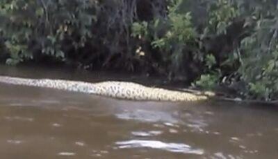 AGORA DEU MEDO: Sucuri de 6 metros é flagrada boiando em rio após engolir presa em MS