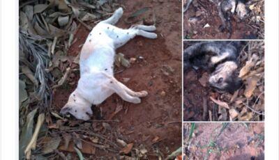 'Serial Killer' de animais, gatos são encontrados mortos e irmãs denunciam em Glória de Dourados