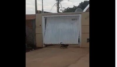 Cachorro abre portão de elevação quando quer passear em Campo Grande