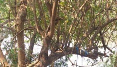 Servidor público é encontrado pendurado em árvore