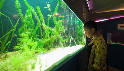 Em Bonito MS, o Aquário de Bonito é um passeio inesquecível para crianças e adultos