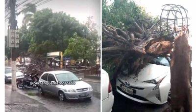 Temporal derruba árvore sobre carros e deixa bairros no escuro