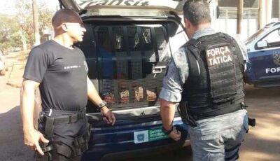 Dez são presos em operação que encontrou drogas em Dourados