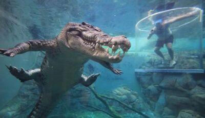 Mergulho com crocodilos gigantes na Austrália (Vídeo)