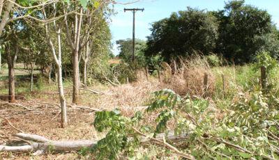 Energisa é denunciada cometendo crime ambiental em Fátima do Sul