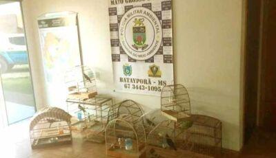 Dois moradores de Ivinhema são autuados pela PMA por manter aves silvestres em cativeiro