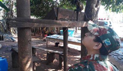 Sitiante é multado por manter animal silvestre ilegalmente em cativeiro em Deodápolis