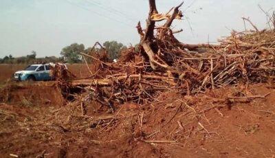 Desmatamento de área para cultivo de mandioca leva produtor a ser multado em R$ 6 mil