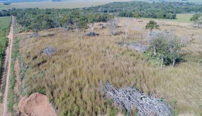 PMA autua fazendeiro em R$ 47 mil por desmatamento ilegal de cinco áreas nativas em Bonito