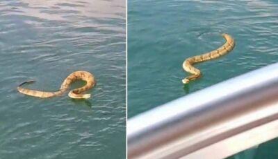 Cascavel nada até barco e aterroriza família em lago