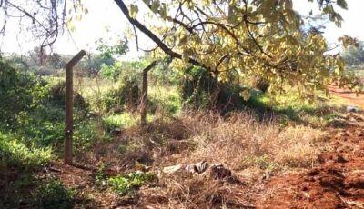 Indígena é encontrado morto com suspeita de excesso de bebida e frio