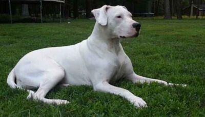 DEODÁPOLIS: Cachorro é torturado e morto a golpes de facão na frente de crianças após arranhar carro