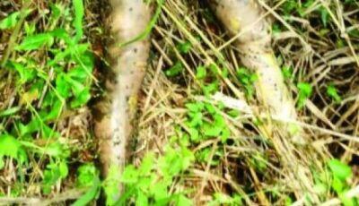 Corpo de brasileira é encontrado às margens de estrada no Paraguai