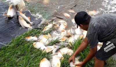 Pesqueiro 7 Bello recebe 6 toneladas de peixe e tem almoço neste domingo em VICENTINA