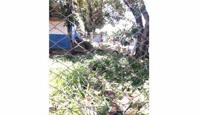 Mãe de aluno reclama de sujeira e mato alto em escola municipal de Dourados