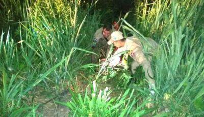 De cueca e rodeado de jacarés, homem é resgatado de riacho com sinais de hipotermia em Corumbá