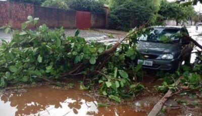 Chuva rápida derruba árvores e deixa casas sem energia em cidade do MS