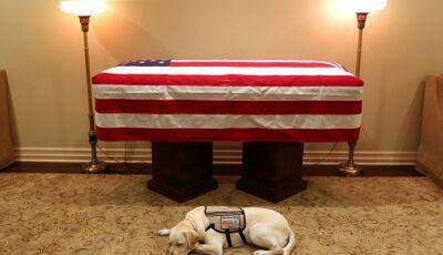 Cachorro de George H.W. Bush é visto deitado ao lado do caixão