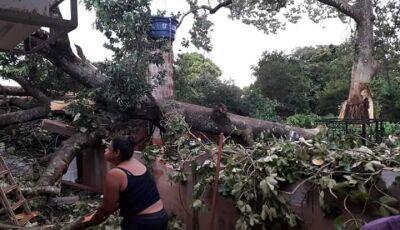 Temporal destelha casas, derruba árvore e torre de internet