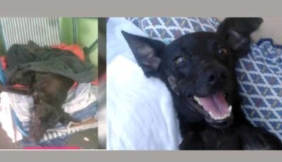 """Conheça a história de """"Neguinho"""",um cãozinho que sobreviveu graças ao amor de voluntária"""