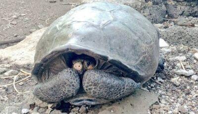 Encontrada no Equador tartaruga gigante considerada desaparecida há um século