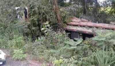 Enxame de Abelhas ataca motorista de carreta que entra em matagal