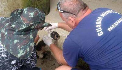Cão abandonado em ilha estava sendo comido vivo por urubus