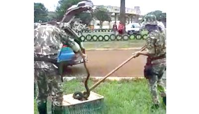Populares encontram jiboia de 1,5 metro próximo ao Douradão