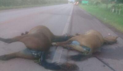 Bombeiros socorrem vítima de colisão entre carro e cavalos na BR-262; animais morreram
