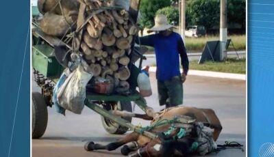 Câmara vai discutir projeto de lei que proíbe utilização de veículos de tração animal em Corumbá
