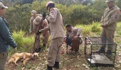 """Cachorro passa 2 dias """"preso"""" em rio, é salvo e já tem família adotiva"""