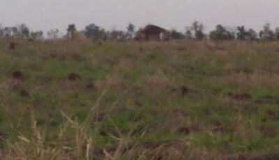 Índios ampliam invasões e levam terror à região Norte de Dourados
